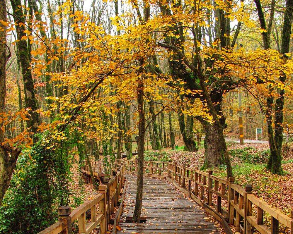 سفر در پاییز