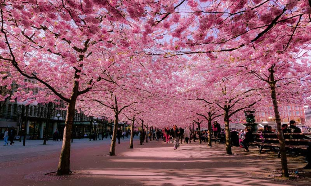 بهار در استکهلم
