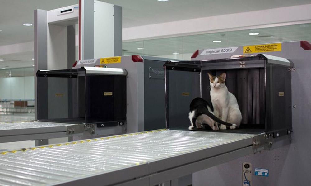آنچه باید در مورد چک های امنیتی فرودگاه بدانید