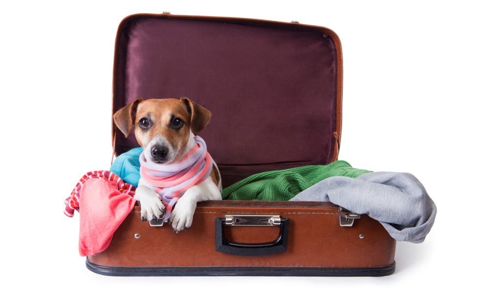 حمل حیوانات خانگی با اتوبوس