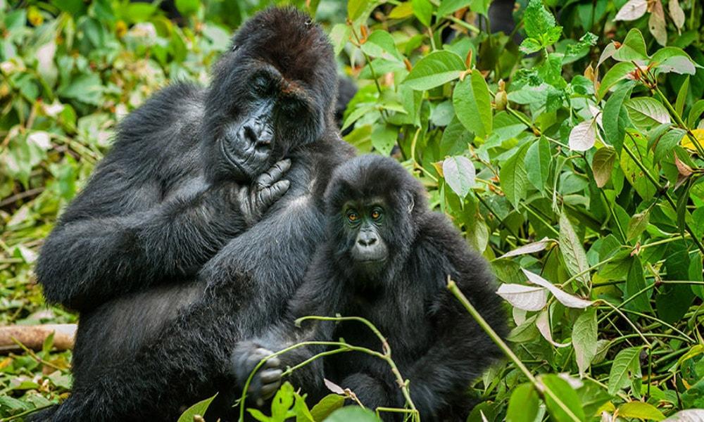 خطرناک ترین کشورهای جهان برای توریست ها-کنگو