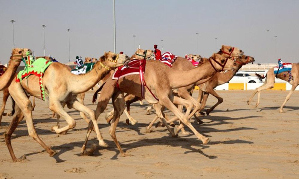 سفری ارزان به ابوظبی